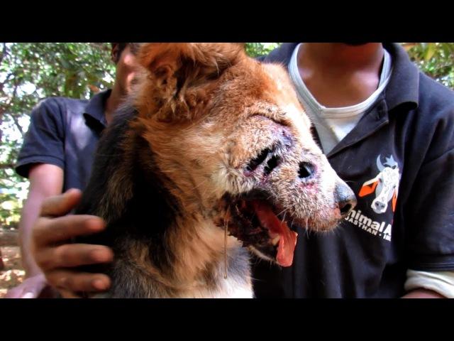 Чудесное спасение собаки с ранами на морде