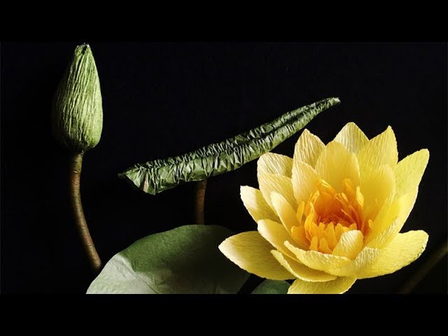 ABC TV | How To Make Water Lily Paper Flower From Crepe Paper - Craft Tutorial