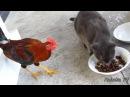 ПРИКОЛЫ С ЖИВОТНЫМИ подборка смех до слез 2017 Funny Cats 36
