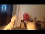 Попугай разговаривает с котиками