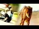 Italo disco. Modern Traking - Animal Bikes. Анегин-Луна remix