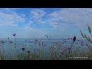 Море, красивые цветы, музыка, релакс, природа, медитация, сон, красивое видео. Кры...