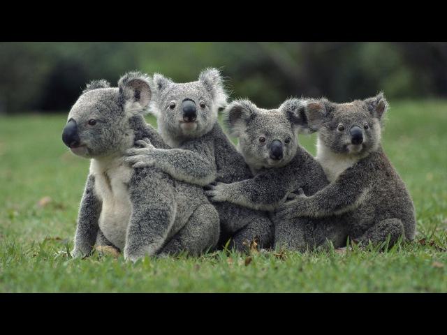 Дикая природа Австралии.Документальный Проект HD