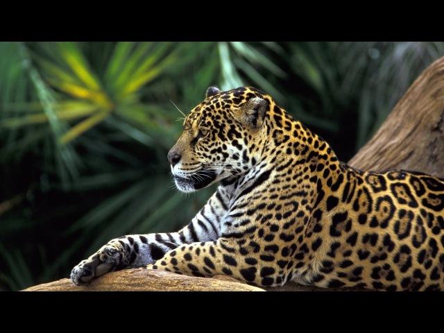 Богатство и беды Амазонии