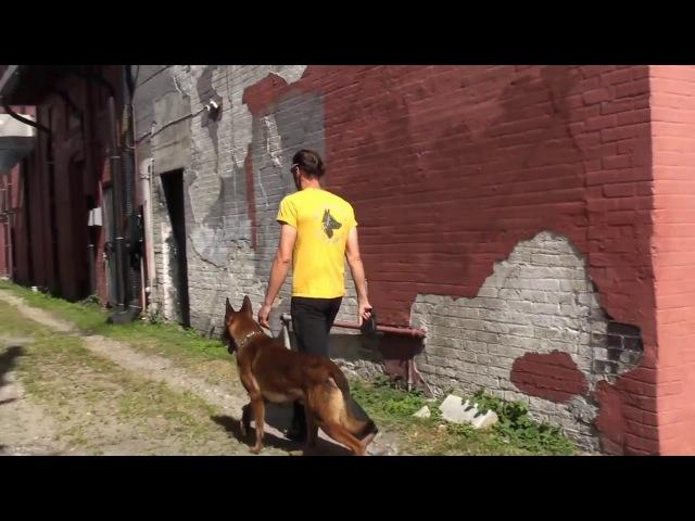 Hodowla psów obronnych