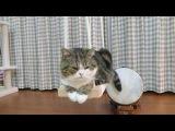 Кот играет хвостом на барабане