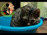 Почему кот стал гадить? Основные причины и что делать.