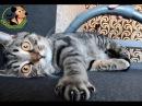 Кот против пылесоса Cat VS vacuum cleaner