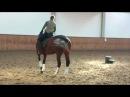 Dressurtrainer.de - Dressurtraining Die richtige diagonale Hilfe im Schritt und Trab