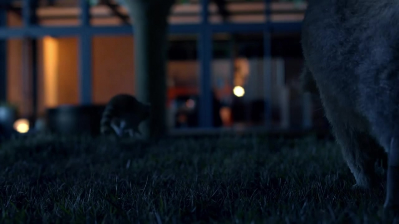 Life Is On by Schneider Electric - Raccoon Dance Party!