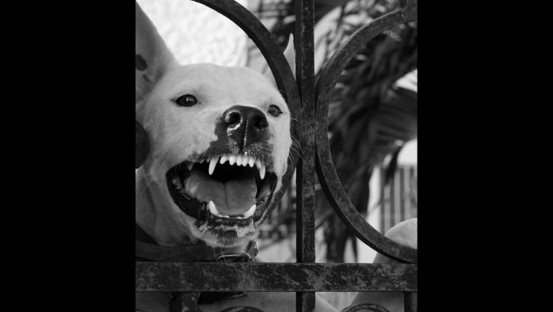 Нападение собаки МЕГА г Омск