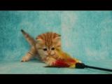 Золотая мраморная кошечка