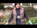 Уборка и хранение гладиолусов