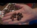 Шоколад из какао бобов дома