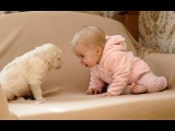 Baby Loves Labrador Puppy because they are best friends Dog and Baby Compilation