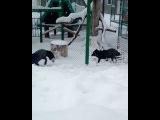 pica_pica_motherfucker video