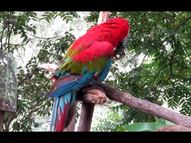В мире животных звучит красивая МУЗЫКА