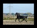Running free video of Tygo -