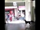 очень счастливая собака