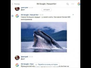 Умный Google bot - напиши мне!