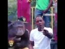 Gangsta monkey