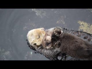 Sleep on Mom