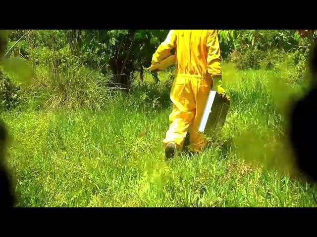 пчелиный яд (апитоксин) - сбор, полезные свойства, как образуется, лечение