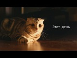 С Алисой поем песню - Подарок для Максима, Алёны и котика Арчи