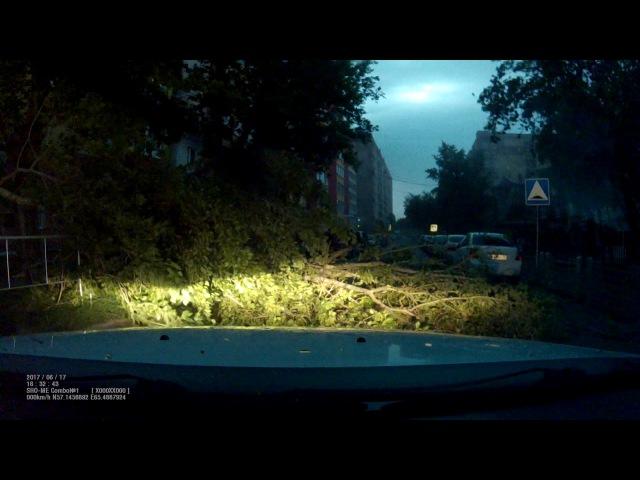 Тюмень. Падение дерева в бурю перед моим авто.