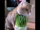 """""""A good breakfast is a good way to start the day 🥐☕️🌿 - @hosico_cat cats_of_world and follow us…"""""""