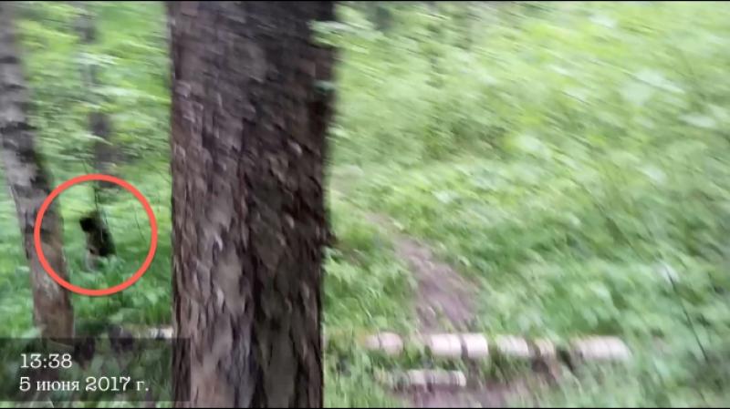 Лес... FRINGE | За гранью
