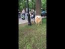 Кокос играет с собакой в парке Гагарина
