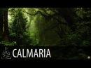🎧 FLORESTA CHUVA ~ Macacos Pássaros Natureza ~ 8 horas de som ~ Relaxar Acalmar Dormir ~ ♫014