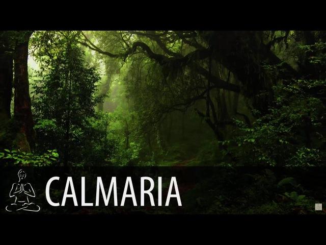 🎧 FLORESTA, CHUVA ~ Macacos, Pássaros, Natureza ~ 8 horas de som ~ Relaxar, Acalmar, Dormir ~ ♫014