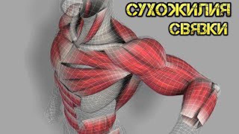 Как укрепить связки и сухожилия, избежать травм тренировки, питание, добавки