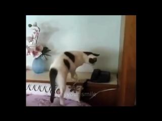 KOTY_PRIKOLY_2016_Luchshie_Prikoly_s_kotami_Funny_Cats_Complation_2016_(MosCatalogue.ru)