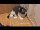 Кот - оживший кошмар наперсточника