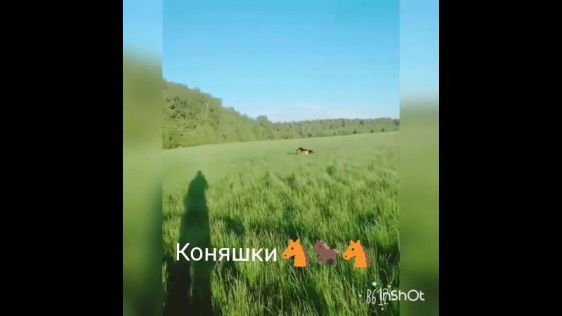 Две коняшки в одной упряжке 🐴 🐎 🐴. Легенда Сорвиголова и Герц Вольф