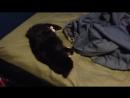Разбудил кота петардой