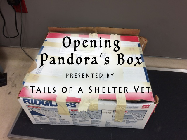 Opening Pandora's Box - The Makeover of a Severely Neglected Dog Battling Cancer
