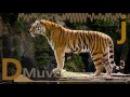 Vari4HUN - Make A Move by DMuvej