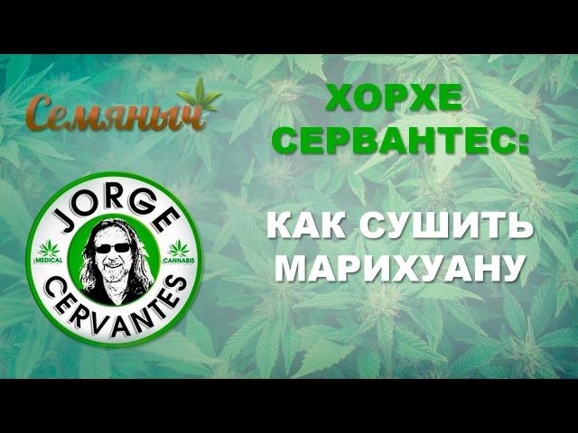 Хорхе Сервантес: Как сушить марихуану. Перевод и субтитры от Семяныча