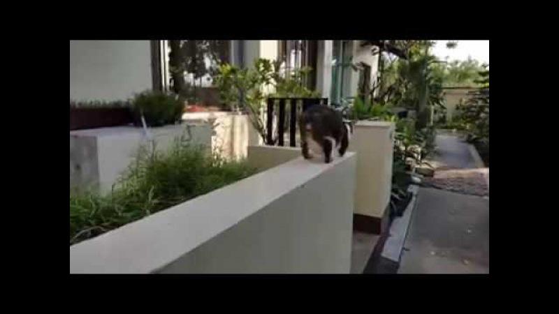 Двулапая кошка пленила соцсети