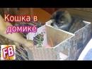 Кошка Кусачка поселилась в кукольном домике