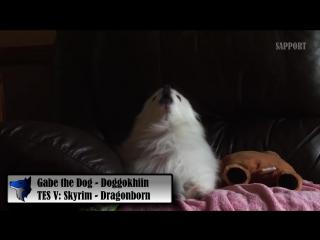 Gabe the Dog - Doggokhiin (TES V׃ Skyrim)