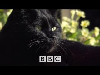 Тайная жизнь кошек BBC. Horizon