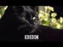 Тайная жизнь кошек BBC Horizon