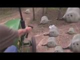 10 minutes of bouncing seals