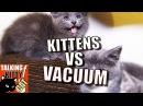 Talking Kitty Cat 49 Kittens vs Vacuum