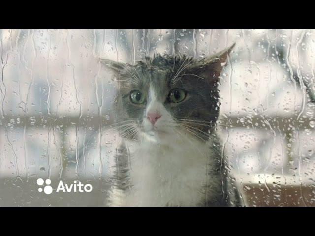 Реклама АВИТОAVITO. Кот, Кошка. Мур! Ну все! Щас ты у меня получишь! (прикол юмор смеш...